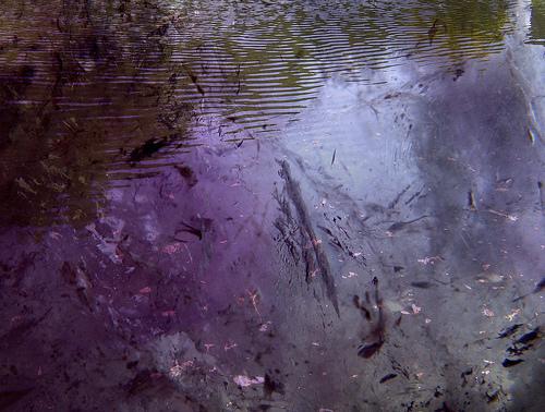 amethystwater