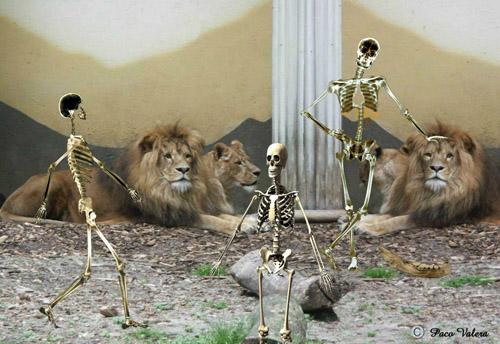 Zoo Keepers