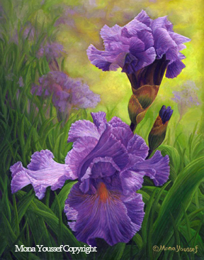 Purple-Iris by Mona Youssef