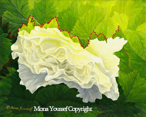 White begonia by Mona Youssef