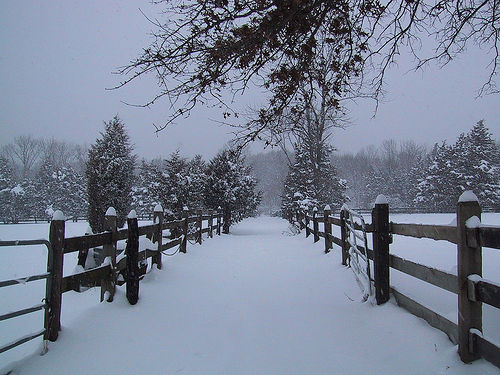 Center Path in Snow - Long View