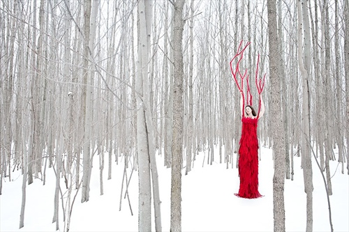 red_tree_in_the_forest