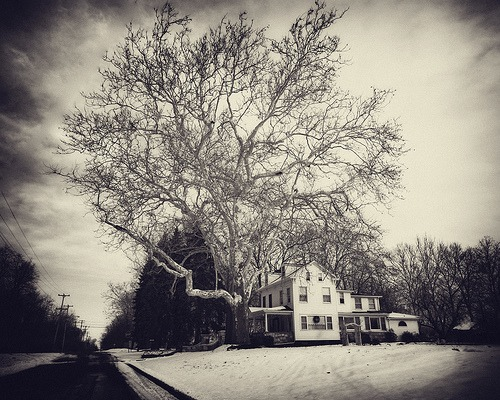 .the_house_by_the_tree