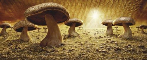 mushroom savana